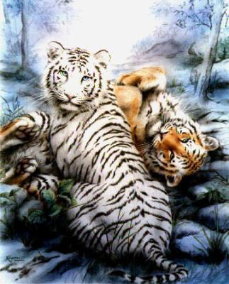Felins page 6 - Tigre blanc dessin ...